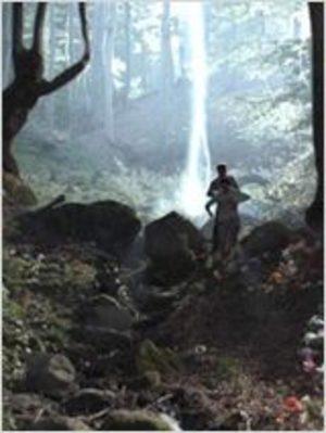 Les Secrets de la forêt noire