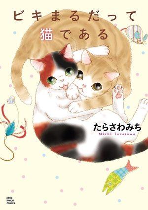 Biki et Maru, les chats